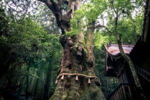 大杵社神社