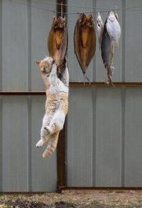 どろぼう猫